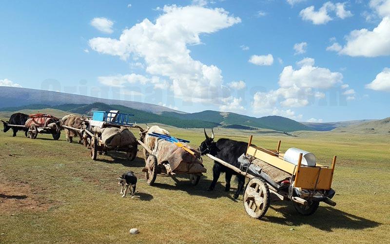 Yurts&Nomads (14)
