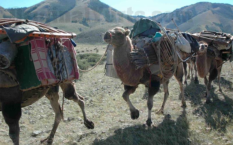 Yurts&Nomads (16)