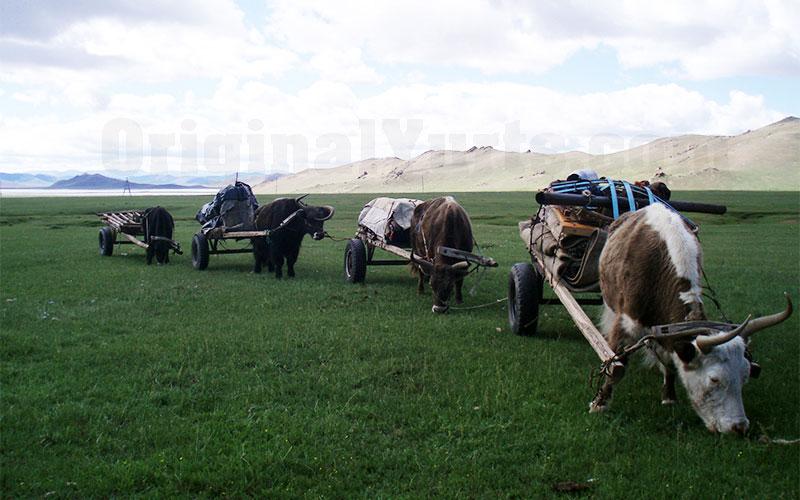 Yurts&Nomads (17)