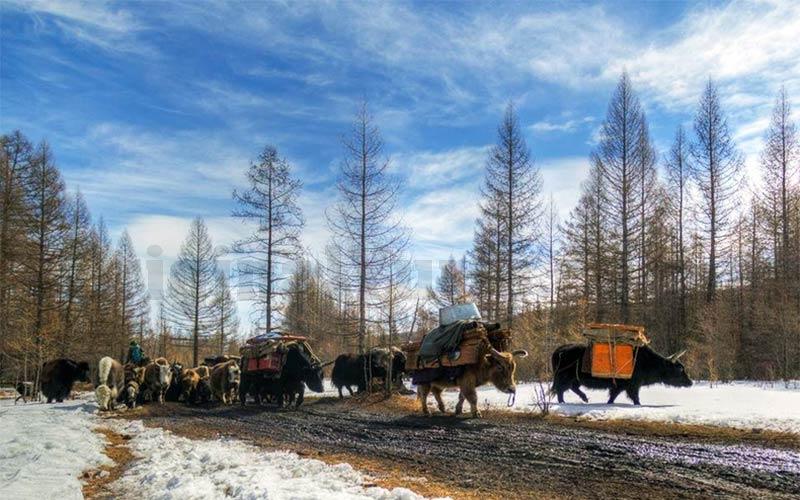 Yurts&Nomads (30)