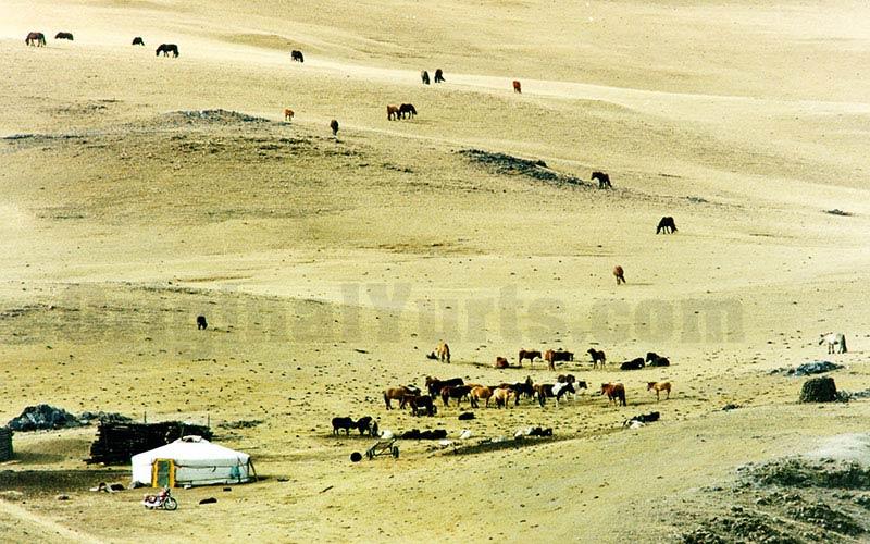 Yurts&Nomads (35)