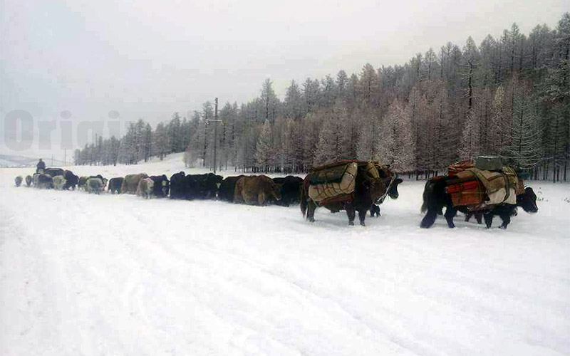 Yurts&Nomads (37)