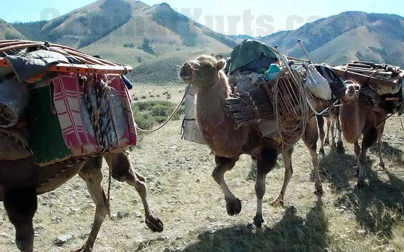 Yurts&Nomads (46)