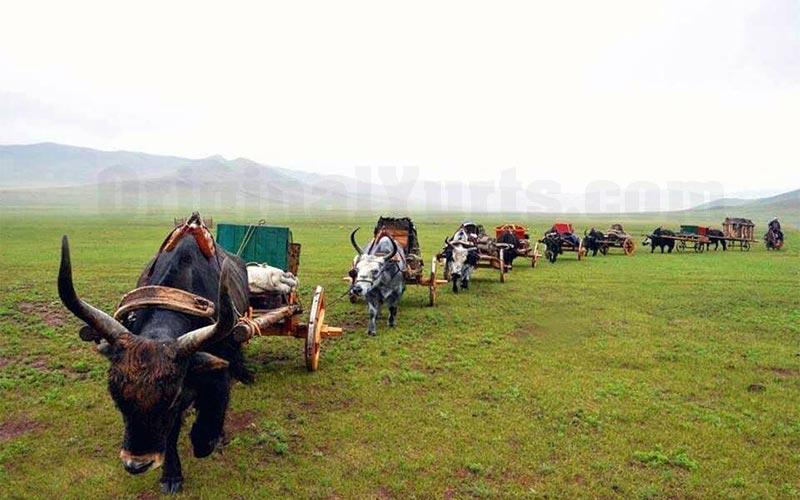 Yurts&Nomads (9)